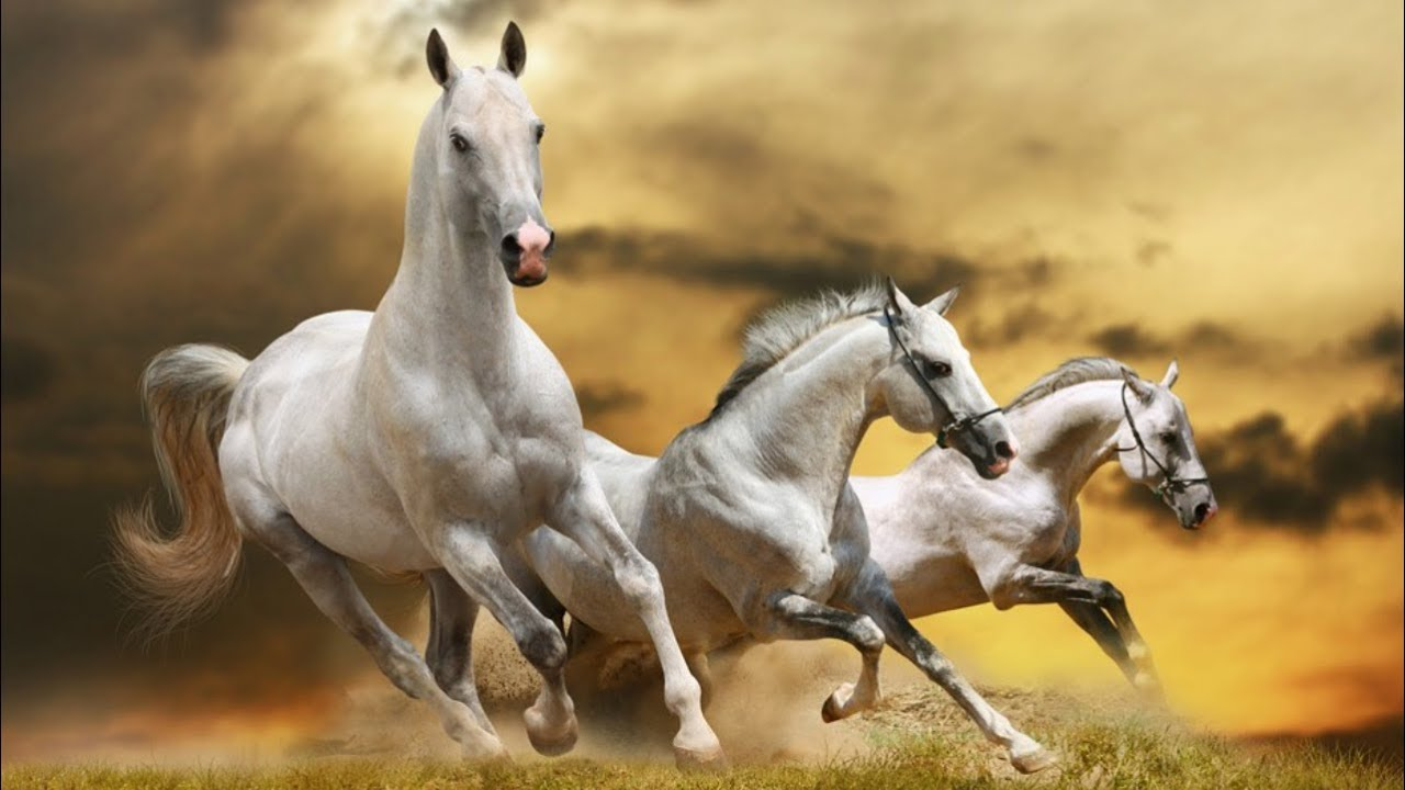 Top 5 Fastest Horse Breeds In The World Thoroughbred Racing Horse Horsetv Live