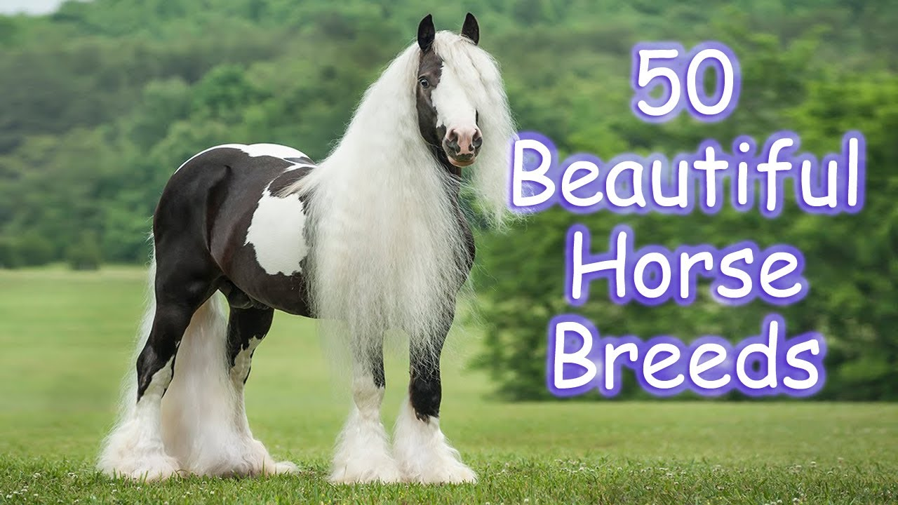 50 Most Beautiful Horse Breeds In The World Horsetv Live