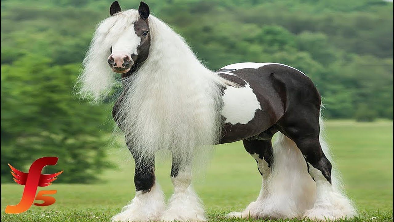 Top 10 Most Beautiful Rarest Horse Breeds In The World Horsetv Live